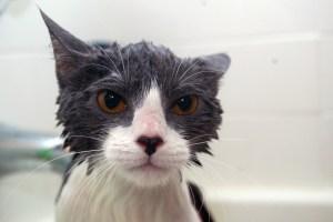 angry-kitty-1250154-1279x852