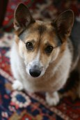 Cannon Beach Dog - Erin J. Bernard
