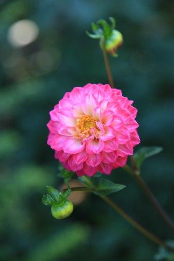Flower, Cannon Beach - Erin J. Bernard