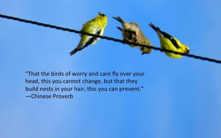 That the birds of worry and care fly over your head, this you cannot change, but that they build nests in your hair, this you can prevent. - Chinese Proverb