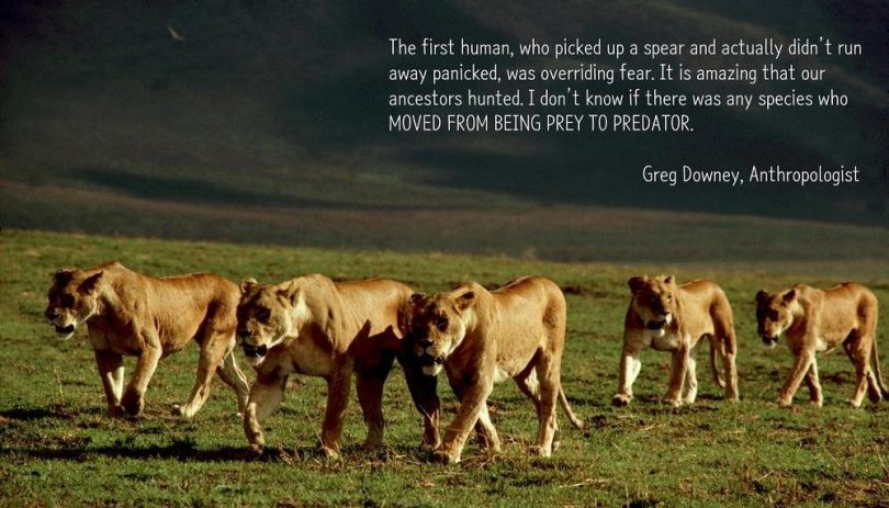 The first human, who picked up a spear and actually didn't run away panicked, was overriding fear. It is amazing that our ancestors hunted. I don't know if there was any species who moved from being prey to predator. - Greg Downey