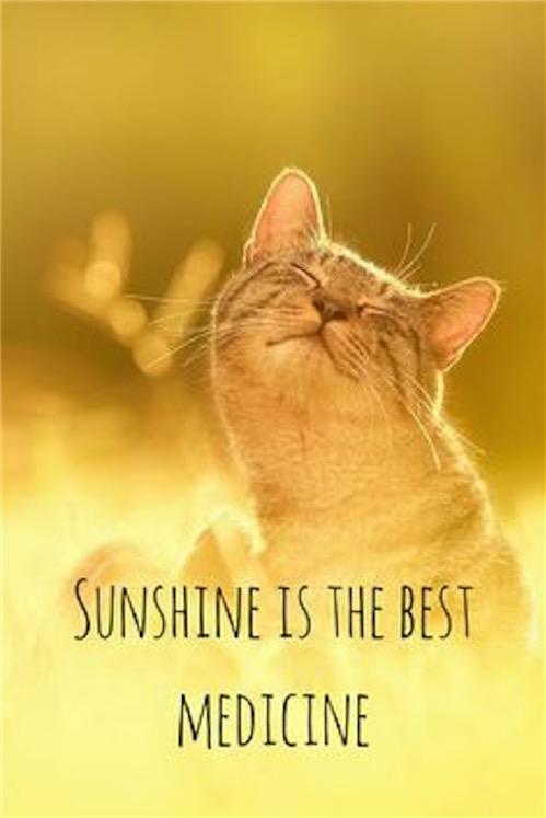 Good Morning Quotes Cat Sunshine