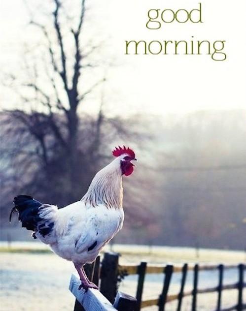 Good Morning Quotes Farm