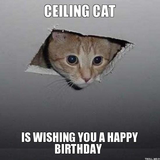 Cumpleaños de miembros del foro 20-adorbs-happy-birthday-cat-memes