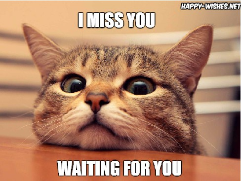 20 Cutest I Miss You Memes Of All Time Word Porn Quotes Love