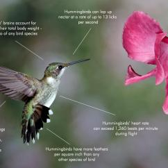 Hummingbird Diagram Of Color 7 Way Round Trailer Wiring Guide Hitchanything How Google Changed The Future Search Fact