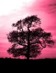 Tree_winter_leaves_246969_l