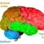 brain centers