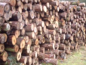 Cut_logs_detail_