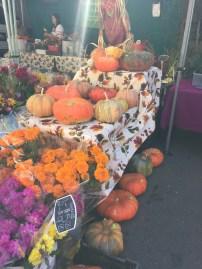 It's pumpkin season!