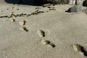 Graphic Footprints