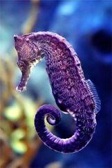 Purple 5