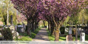 Friedhof_fotolia_64314357-670x336