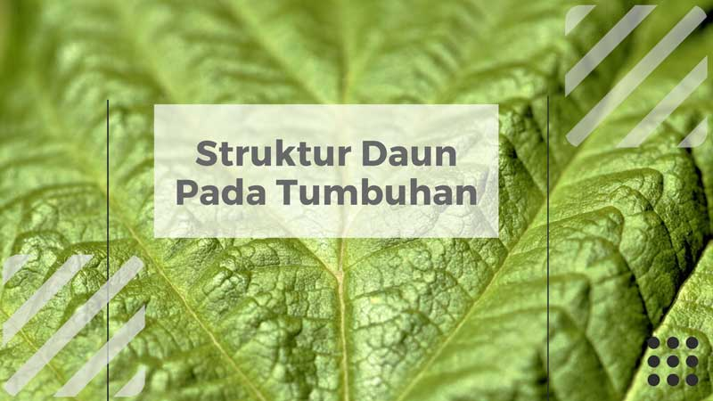 struktur daun pada tumbuhan