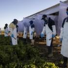 Migrant Farmworkrs