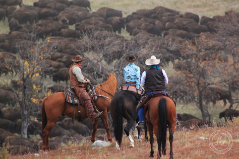buffalo and cowboys