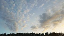 SD sunrise treeline