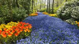 Netherlands Flowers