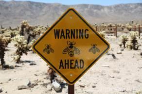 Bees Ahead