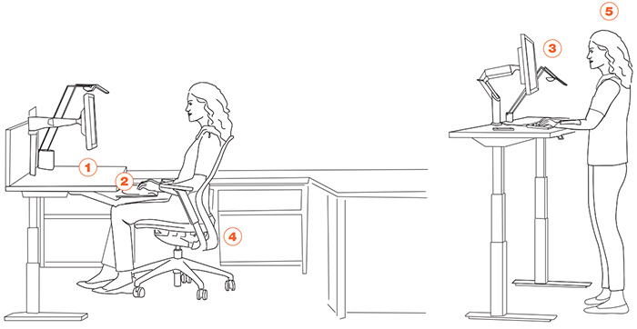 Everything You've Ever Wanted to Know about Ergonomics