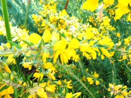 flowers on beehive walk - straddie