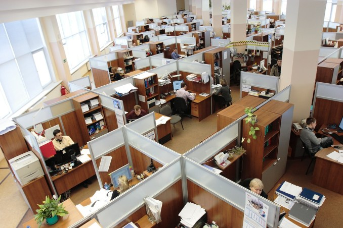 Employees working in cubicles