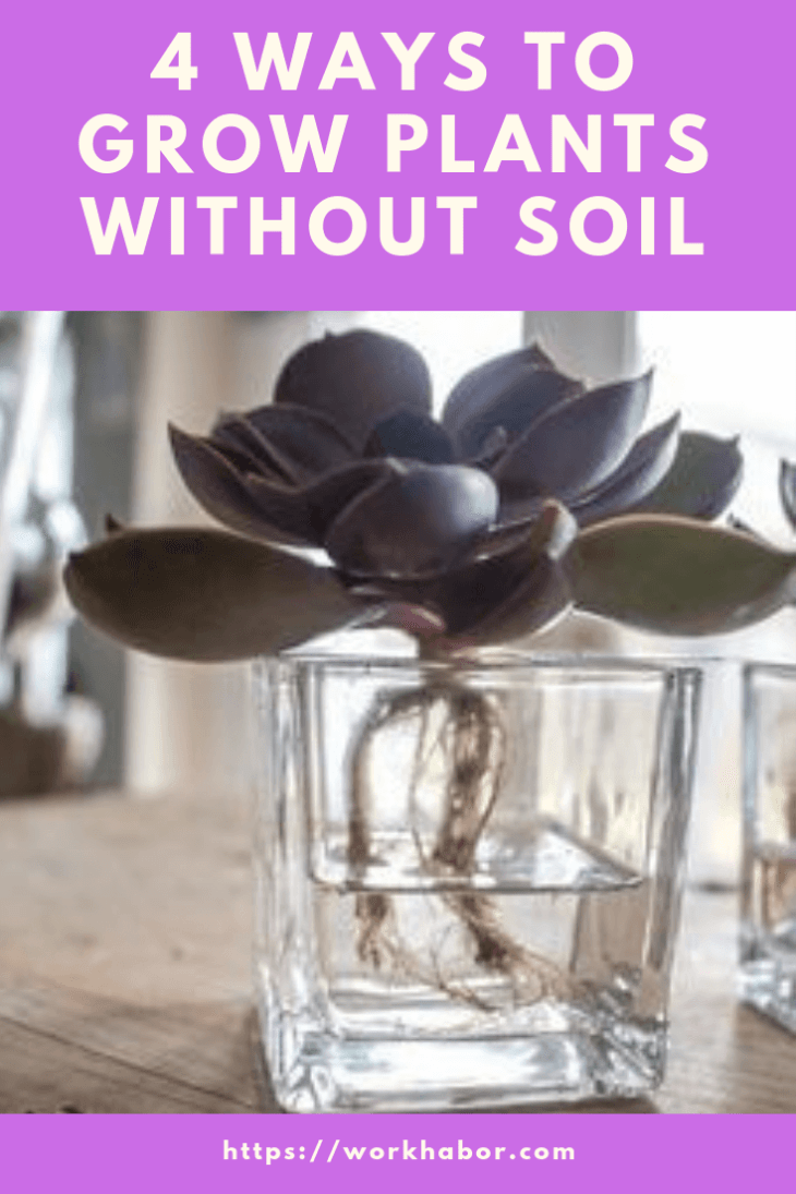 4 ways to grow plants without soil