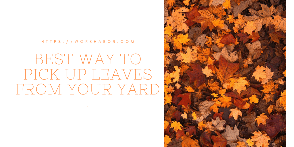Best Way To Pick Up Leaves From Your Yard