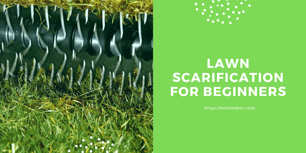 Lawn Scarification For Beginners