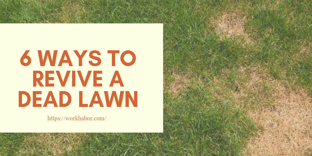 Ways To Revive A Dead Lawn