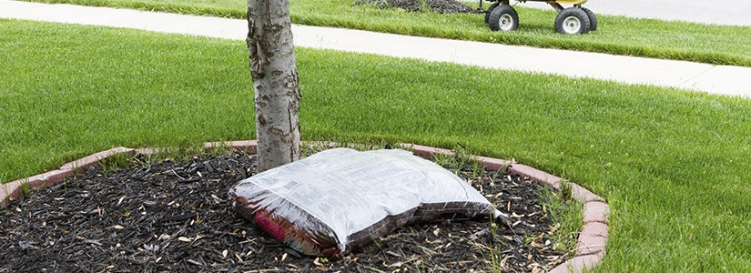 How To Mulch Around Trees
