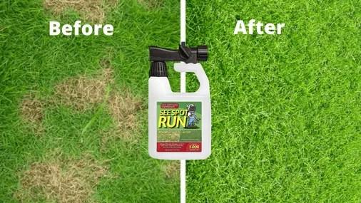 Dogonit Lawn Repair