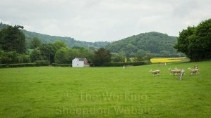View of the fetch and drive gates at Kingsland sheepdog trial