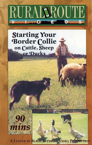 Front cover of Starting your border collie on cattle, sheep or ducks training DVD