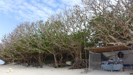 竹富島 カイジ浜(星砂の浜)だよおおお。海ばっかの写真じゃあきると思って浜の写真あげてみたよおおおおおおおお