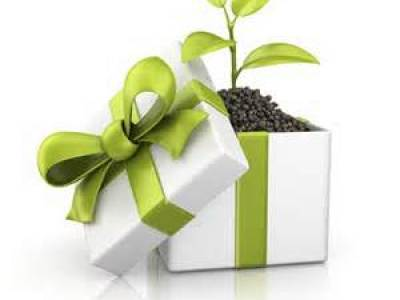 green-gift