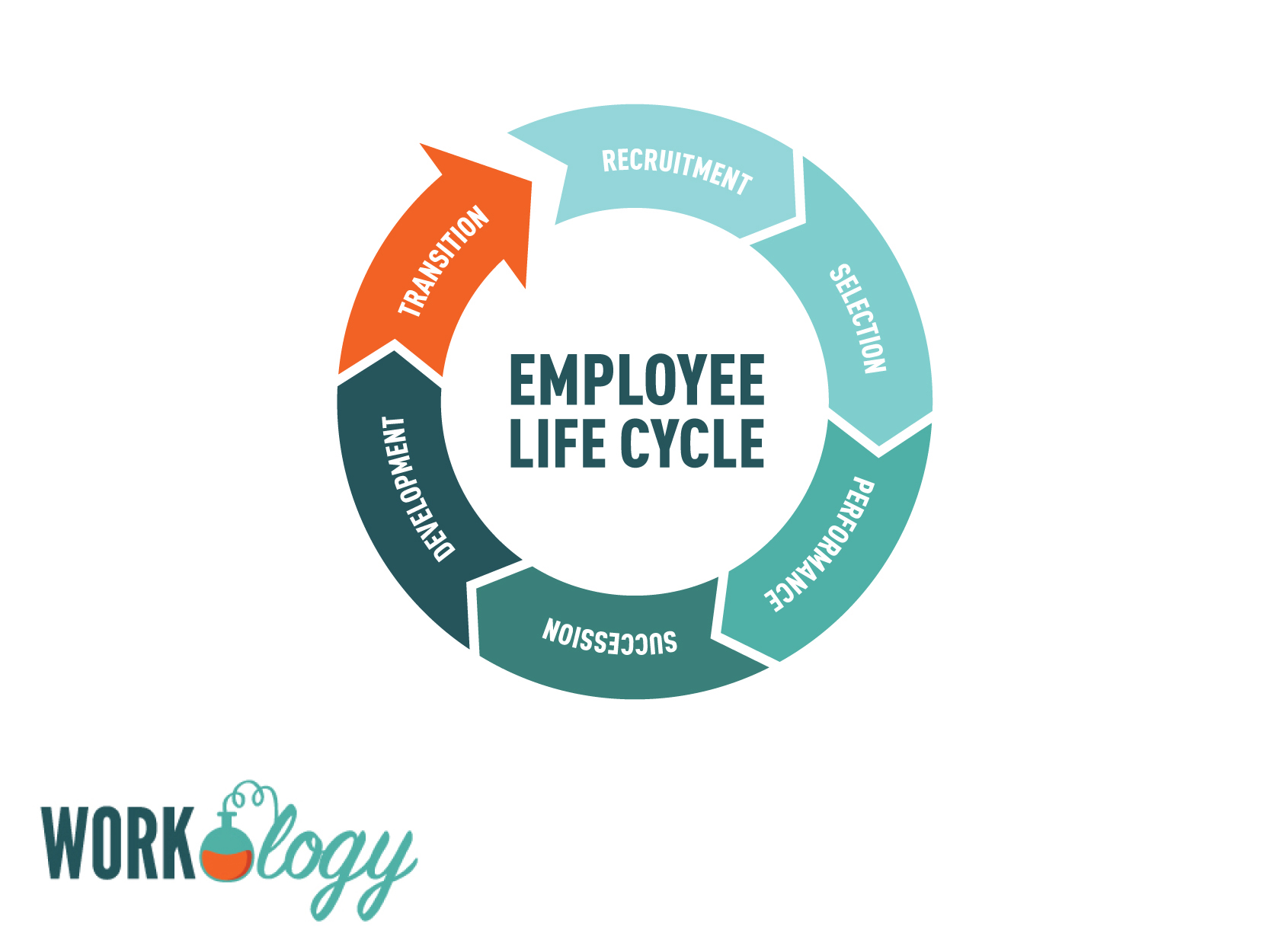 employee life cycle diagram craftsman air compressor parts why internet sourcing isnt your recruiting savior workology