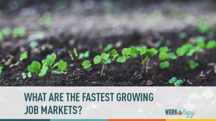 what are the fasted growing fields