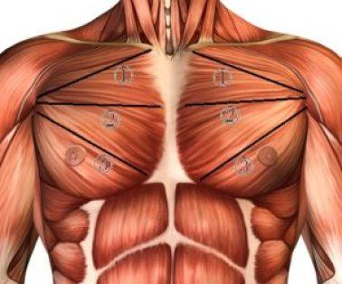 大胸筋上部中部下部
