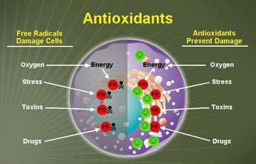 » The Antioxidant Paradox And Its Implications For