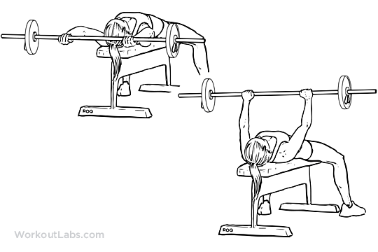 Barbell Pullover / Lying Chest Overhead Extension