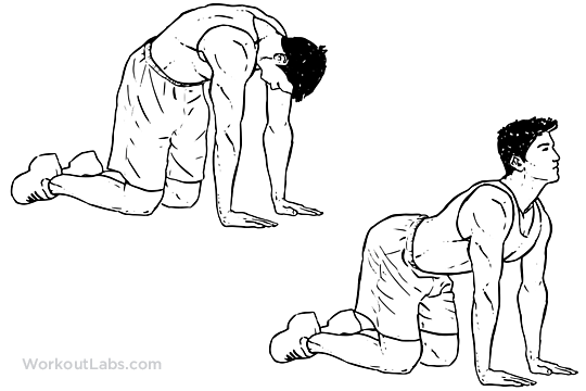 "Search Results for ""Illustrated Flexibility Exercises For"