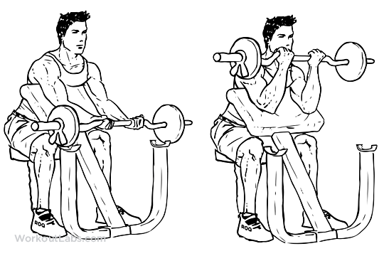 Image result for preacher curls