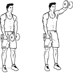 Muscle Diagram Anterior Hand Centurion Keypad Wiring Forward / Front Dumbbell Raise | Illustrated Exercise Guide - Workoutlabs