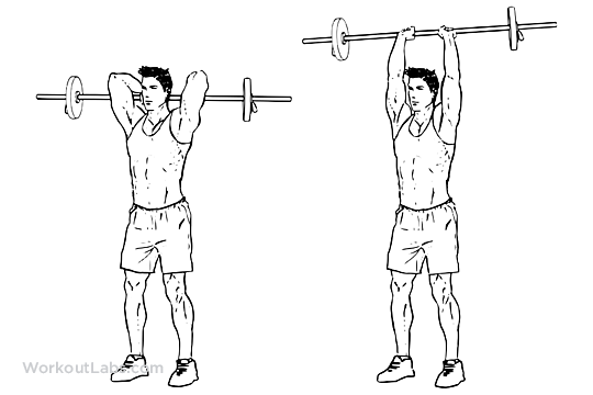 Standing Overhead Barbell Triceps Extensions  WorkoutLabs