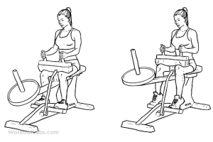 Seated Calf Raise | Illustrated Exercise guide  WorkoutLabs