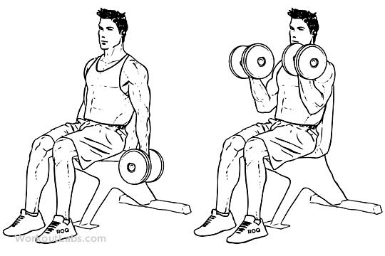 Comment gagner du muscle dans vos bras en un mois, sans