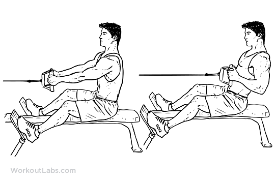 Image result for Seated Cable row