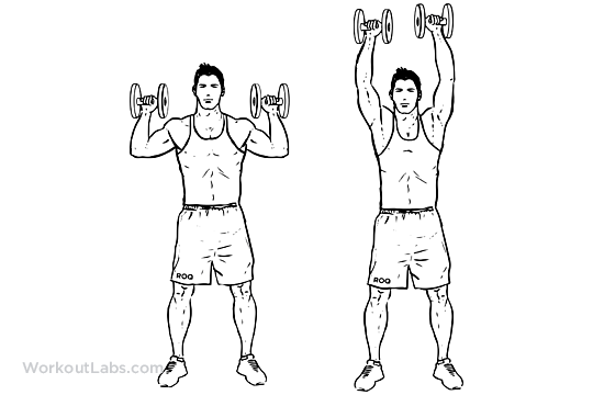 Standing Dumbbell Overhead Shoulder Press  WorkoutLabs