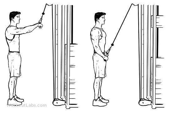 Straight Arm Pulldown  Illustrated Exercise guide